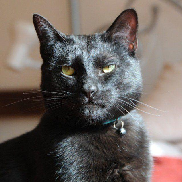 Mr. Biggles is not to be messed with. (Photo: PetRescue)