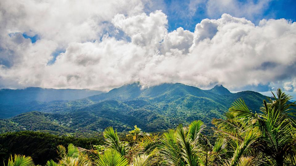 <p><strong>What can we expect from this park?</strong><br> The only tropical rainforest in the U.S. National Forest System, El Yunque National Forest is home to an incredible amount of biodiversity—even after Hurricane Maria. There are 240 tree species alone, making it a must-see on any nature-lover's itinerary. One need not worry about big wildlife, but lizards and frogs—like the island's coqui mascot—abound. Hike the rather easygoing trails to see all the vegetation, small animal life, and waterfalls.</p> <p><strong>What should we be sure to see?</strong><br> Be sure to see La Coca Waterfall as well as Yokahú Tower, offering enjoy panoramic views of the forest.</p> <p><strong>How easy is it to navigate—especially for visitors with limited mobility?</strong><br> There is quite a bit of signage to keep hikers on the right path, but those with mobility issues should proceed with caution.</p> <p><strong>Anything else we should be aware of before planning a visit?</strong><br> According to the forest service only about 40 percent of the park is currently open while recovery from Maria continues. Also know, entrance to the forest, which can be navigated with trail maps available online, is free, but many independent operators offer paid tours that include pick-up and dropoff at your hotel.</p>