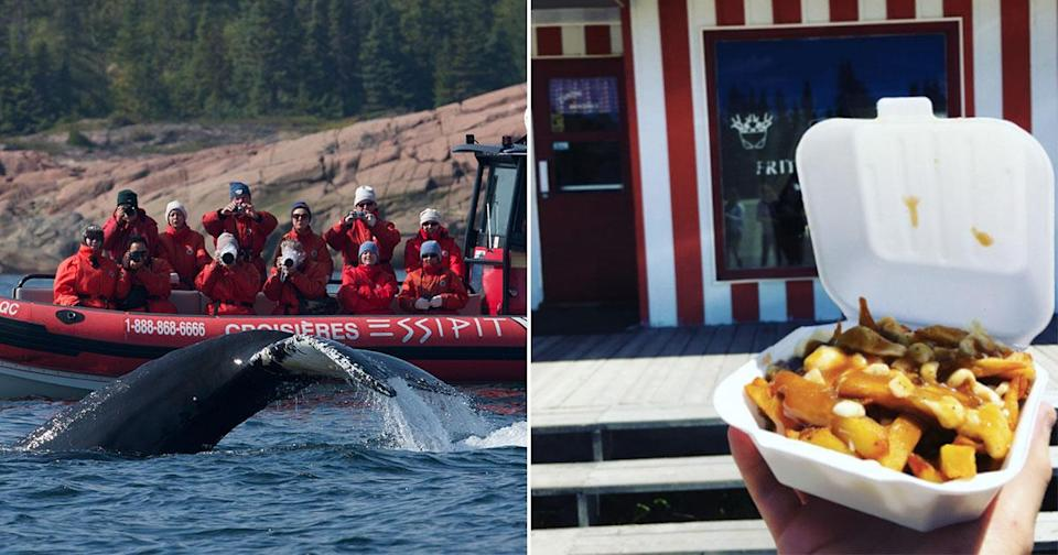 Whales followed by Poutine. Only in Canada (Tourisme Quebec/Instagram Rob Young)