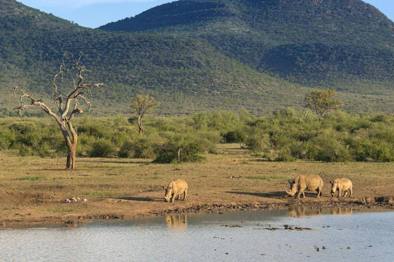Rhinos drinking in Kruger National Park (Getty/iStock)