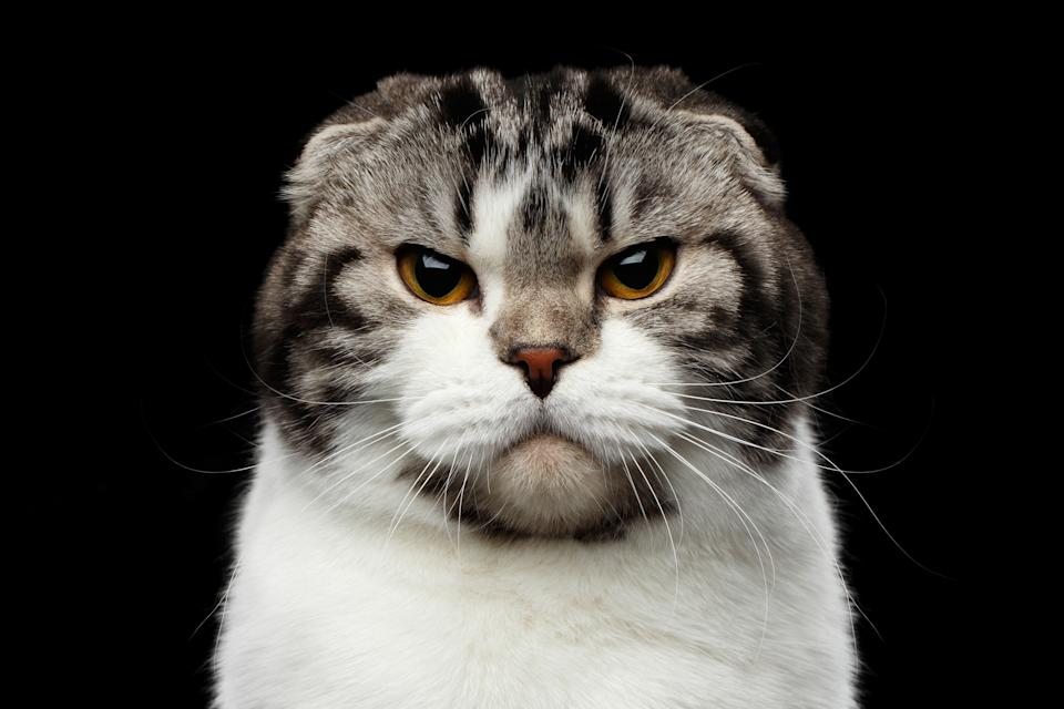 It can be notoriously hard to know what cats are really feeling (Getty Images)