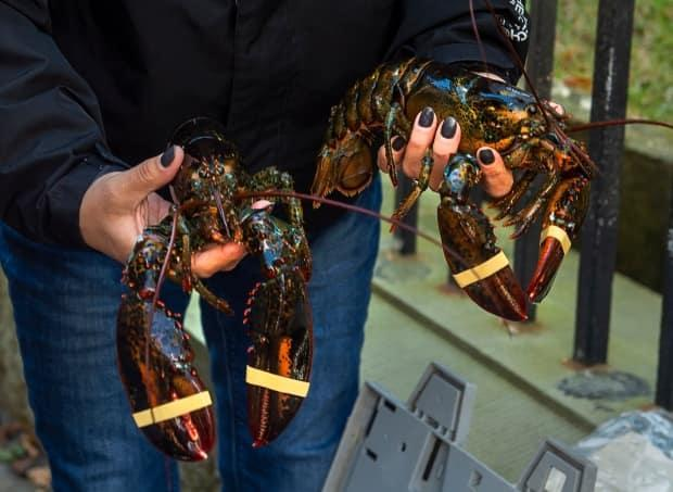 A woman holds two lobsters as Cheryl Maloney, a member of the Sipekne'katik First Nation, sells them outside the legislature in Halifax on Friday, Oct. 16, 2020.  (Andrew Vaughan/The Canadian Press - image credit)
