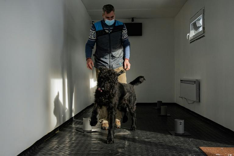 A team of Czech trainers say their Covid-19 detection dogs have a 95 percent success rate