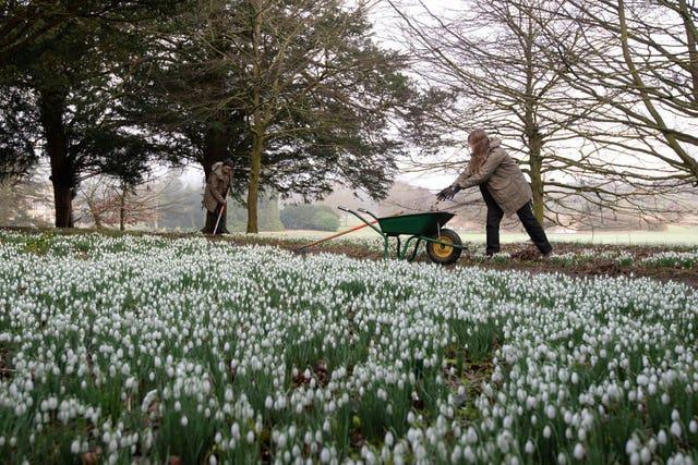 Audley End House snowdrops