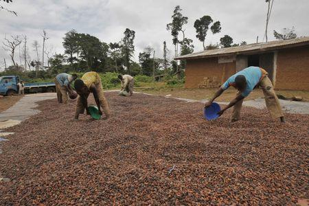 Workers dry cocoa beans in the village of Goin Debe, Blolequin department