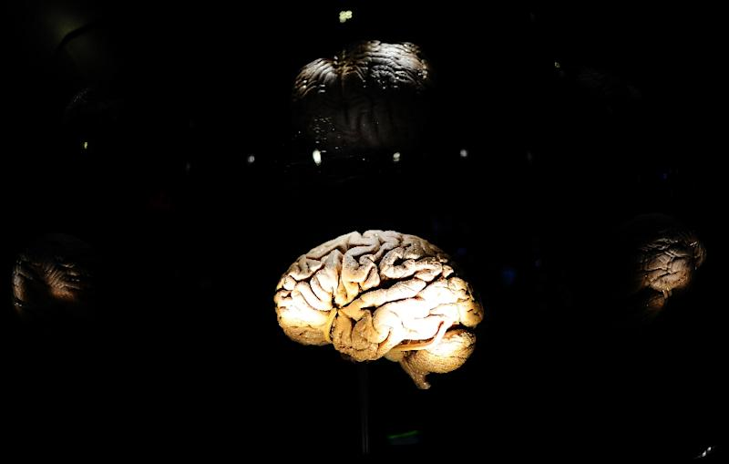 An interactive display on the brain at the American Museum of Natural History in New York, November 16, 2010 (AFP Photo/Emmanuel Dunand)