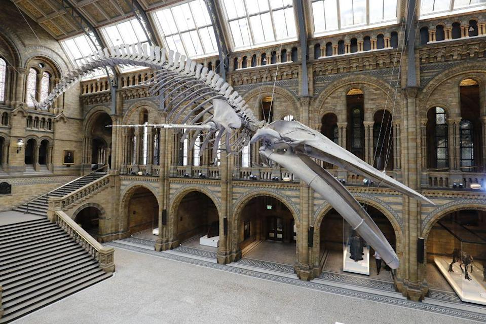"""<p>Looking for a tour that the kids will enjoy too? This is it. Introduce them to the giant Dippy the dino in the entrance hall, as well as specimens in jars, butterflies, the dodo and more as you browse the corridors from your sofa.</p><p><a class=""""link rapid-noclick-resp"""" href=""""https://artsandculture.google.com/streetview/the-natural-history-museum-hintze-hall/yQHjHCmSOMKyhQ"""" rel=""""nofollow noopener"""" target=""""_blank"""" data-ylk=""""slk:Take a virtual tour"""">Take a virtual tour</a></p>"""