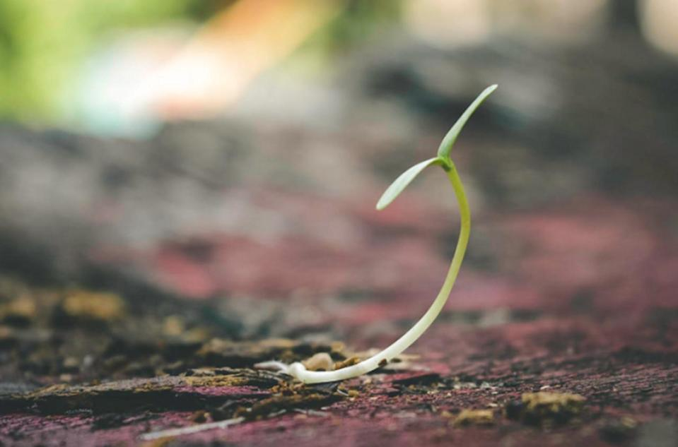Researchers develop coating that makes seeds more resistant to drought