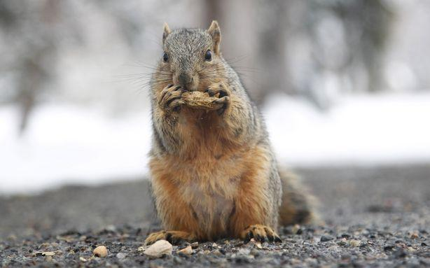 How Worried Should We Be About Squirrels Carrying the Bubonic Plague?