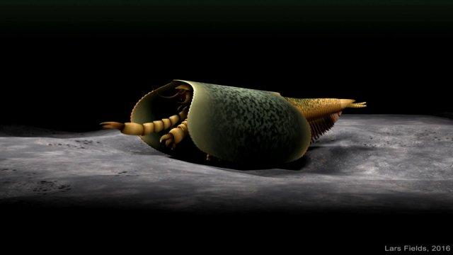 Scientists uncover 508-million-year-old fossil of strange sea creature