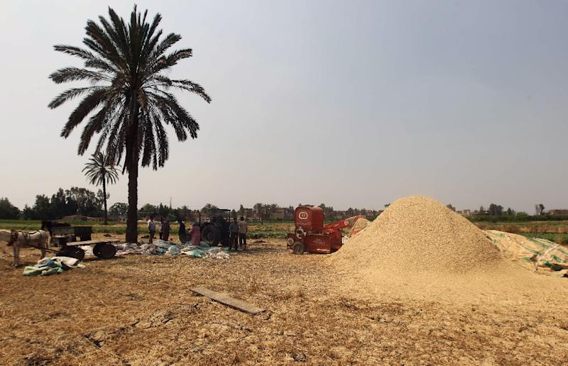 Egypt's former supply minister, Khaled Hanafy resigned after reportedly being found politically responsible for wheat deals that cost Egypt tens of millions of dollars
