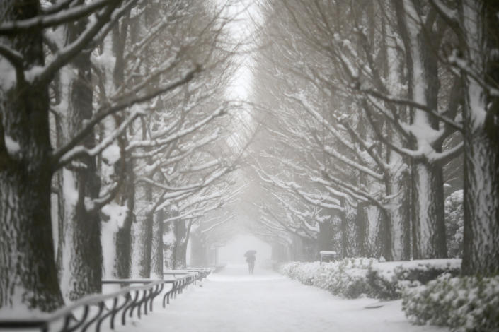 A man walks on snow-covered tree-lined road in Yokohama, Japan, Saturday, Feb. 8, 2014. The Japan Meteorological Agency issued the first heavy snowfall warning for central Tokyo in 13 years. Some 20-centimeter (7.9-inch) of snowfall is expected by Sunday morning in the metropolitan areas. (AP Photo/Eugene Hoshiko)