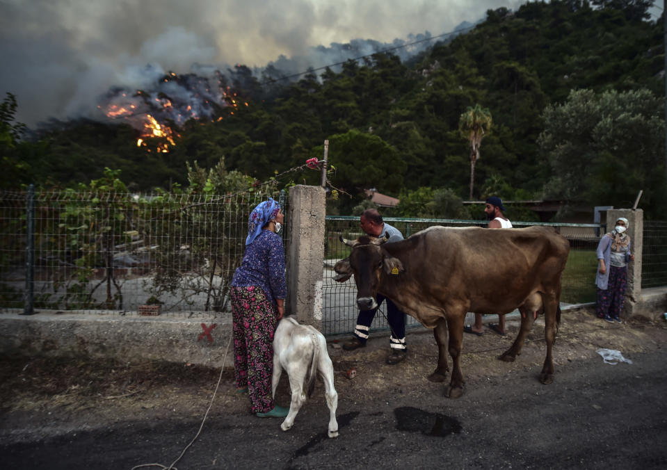 People leave with their animals as advancing fires rage Hisaronu area, Turkey, Monday, Aug. 2, 2021. For the sixth straight day, Turkish firefighters battled Monday to control the blazes that are tearing through forests near Turkey's beach destinations. Fed by strong winds and scorching temperatures, the fires that began Wednesday have left eight people dead. Residents and tourists have fled vacation resorts in flotillas of small boats or convoys of cars and trucks.(AP Photo)