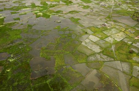 FILE PHOTO: Flooded fields are seen from the air near Beira, Mozambique, in the aftermath of Cyclone Idai