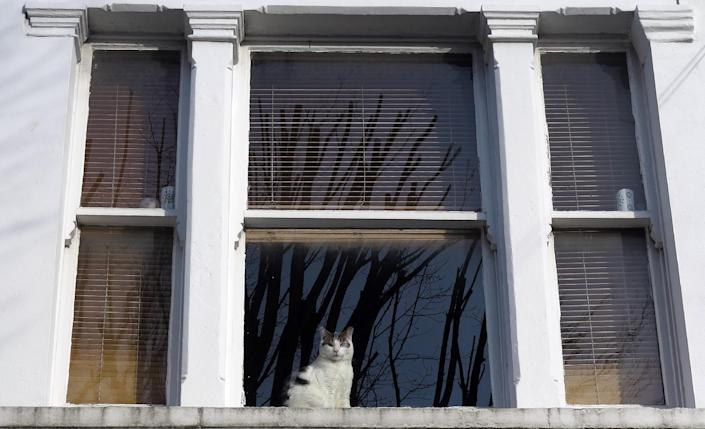 A cat looks through a window in a house in London, Thursday, Feb. 28, 2013. The London zoo is taking stock of an animal you don't often find behind bars, launching what it says is the first interactive map of the British capital's domestic cats. The zoo said that its interface would allow Londoners to upload scientific survey-style photos, descriptions, and locations of their cats _ creating a capital-wide census of the city's felines. The map may not ultimately have much in the way of scientific value, but it could prove popular among Britain's cat owners. (AP Photo/Kirsty Wigglesworth)