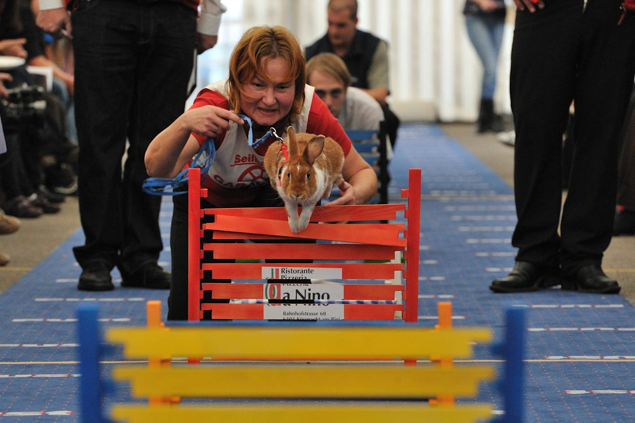WOLLERAU, SWITZERLAND - OCTOBER 30:  Lada Sipova-Krecova of Czech Republic leads her rabbit over a hurdle at an obstacle course during the first European rabbit hopping championships, which Lada Sipova-Krecova of Czech Republic won, on October 30, 2011 in Wollerau, Switzerland. Rabbit hopping is a growing trend among rabbit owners in Central Europe.  (Photo by Harold Cunningham/Getty Images)