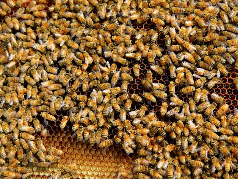 Sting in the tail: use of pesticides in fields is one of the factors leading to a decline in bees (CiWF)