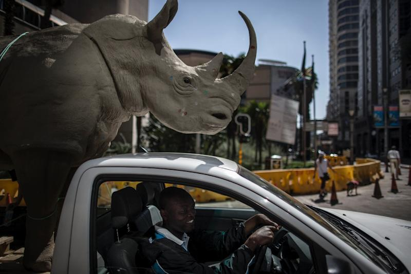 A man drives a pick-up truck carrying a mock rhino during a demonstration marking the opening of the Convention on International Trade in Endangered Species of Wild, Fauna and Flora (CITES) in Johannesburg on September 24, 2016