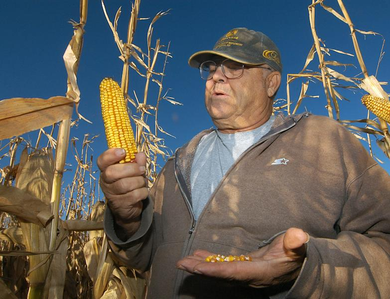 In this Oct. 24, 2013 photo Robert Malsom checks corn in one of his fields near Roscoe, S.D. Malsam nearly went broke in the 1980s when corn was cheap. So now that prices are high and he can finally make a profit, he's not about to apologize for ripping up prairieland to plant corn. (AP Photo/Doug Dreyer)