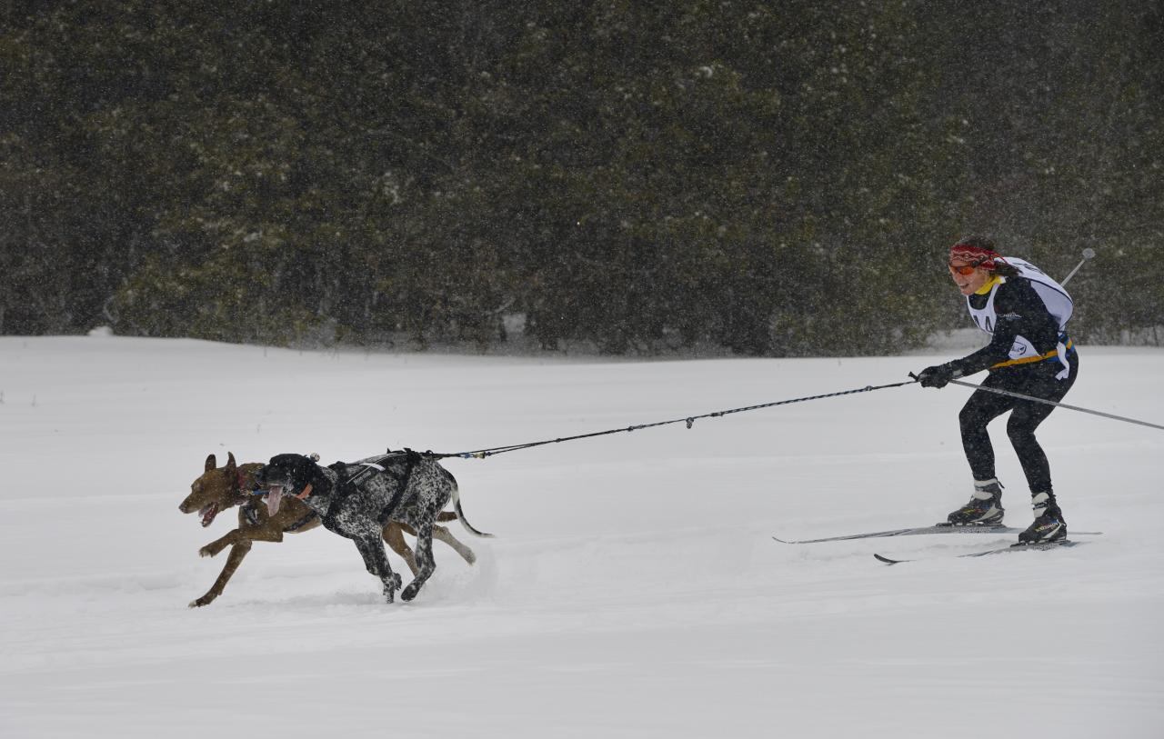 <p>Skijoring can also be done while being towed by dogs. (Getty) </p>