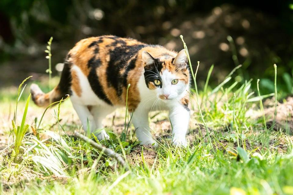Study results suggest predatory instinct, rather than hunger, is probably the main reason some cats regularly hunt wild prey (Ciaran McCrickard/PA) (PA Wire)
