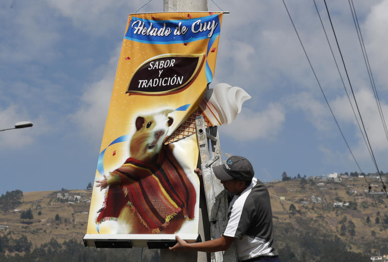 "In this Sept. 28, 2019 photo, a worker installs a banner promoting ""helado de cuy"" or guinea pig ice cream, in Quito, Ecuador. The rodents are a traditional hot dish in some Latin American countries, including Colombia, Peru and Bolivia. But one vendor is taking things to another gastronomic level, serving guinea pigs as a cold dessert. (AP Photo/Dolores Ochoa)"