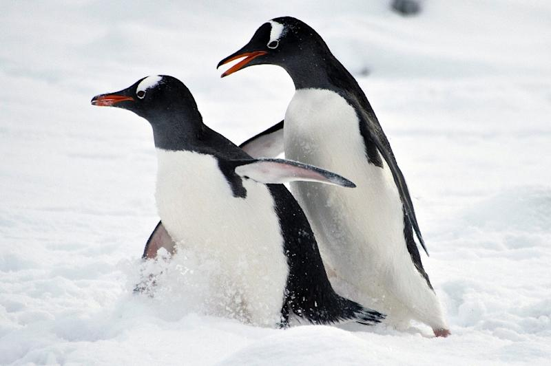 Environmentalists say the Antarctic Ocean is home to more than 10,000 unique species, including penguins, whales, seals and colossal squid (AFP Photo/Vanderlei Almeida)