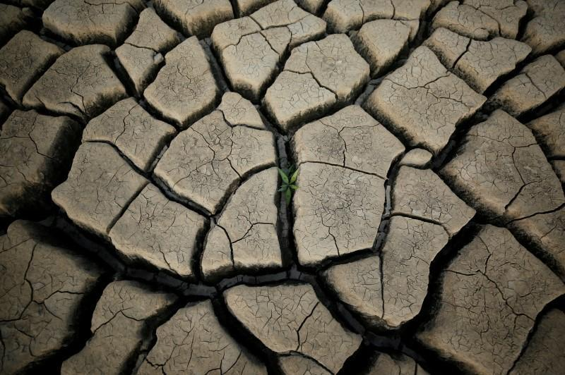 A plant grows between cracked mud in a normally submerged area at Theewaterskloof dam near Cape Town, South Africa, January 21, 2018.