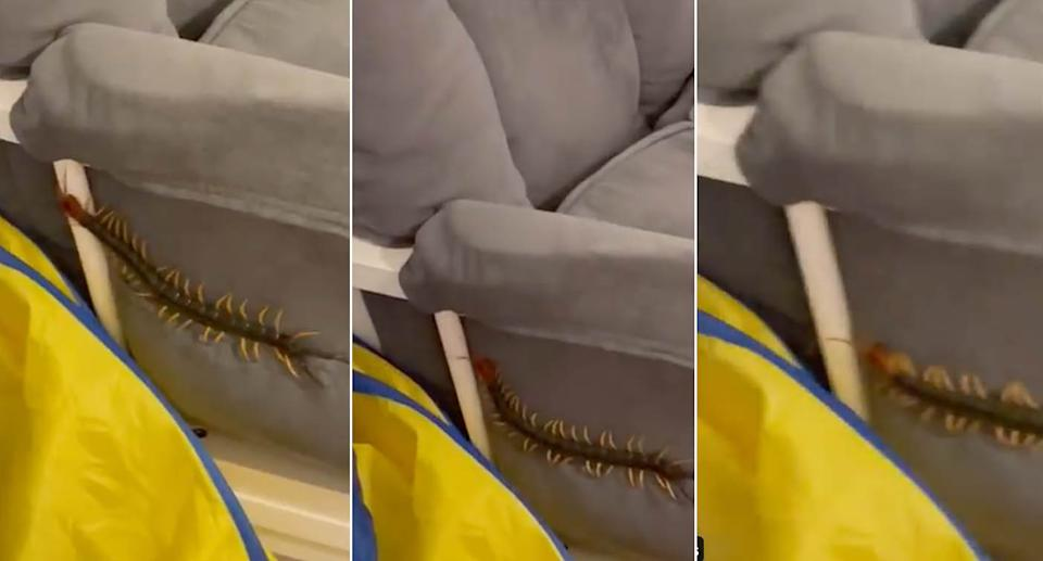 Screenshots from the video on Twitter showing the large centipede crawling up the side of a chair.