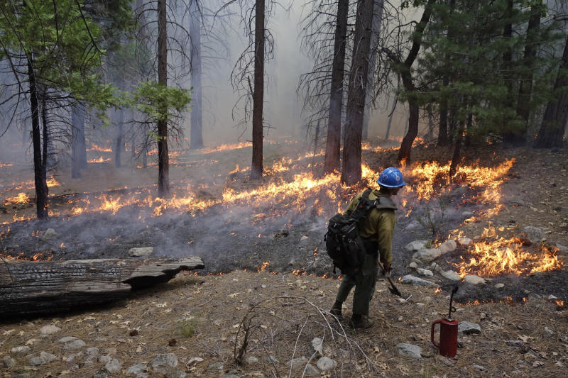 In this June 11, 2019 photo, firefighter Matthew Dunagan watches flames spread during a prescribed burn in Kings Canyon National Park, Calif. The prescribed burn, a low-intensity, closely managed fire, was intended to clear out undergrowth and protect the heart of Kings Canyon National Park from a future threatening wildfire. The tactic is considered one of the best ways to prevent the kind of catastrophic destruction that has become common, but its use falls woefully short of goals in the West. (AP Photo/Brian Melley)