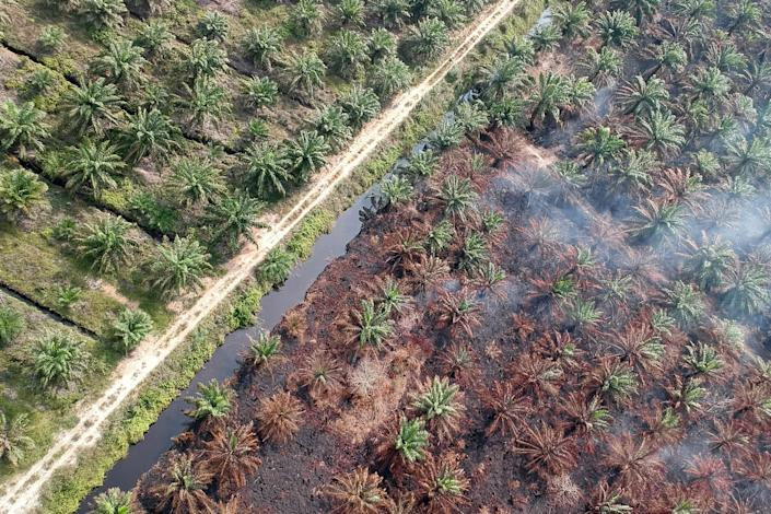 Clearing land and burning peatlands to make room for oil palm trees is a huge source of carbon emissions and air pollution. (Photo: Barcroft Media via Getty Images)