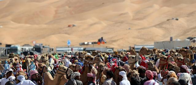<p>Handlers prepare camels to race at the Liwa 2018 Moreeb Dune Festival on Jan. 1. (Photo: Karim Sahib/AFP/Getty Images) </p>
