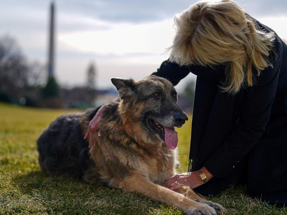 <p>US First Lady Jill Biden pets one of the family dogs, Champ, after his arrival from Delaware at the White House in Washington, DC, on 24 January 2021</p> ((White House/Handout via Reuters))