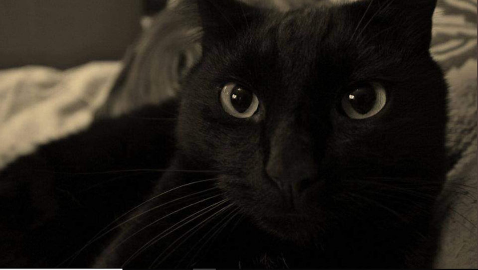 Mo the cat before he went missing in 2012 (Izzy Harris/PA)