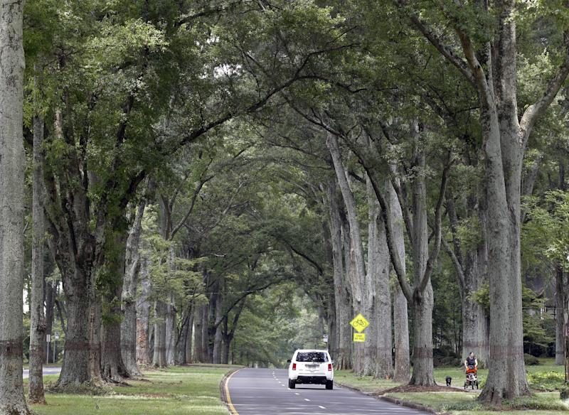 This July 17, 2012 photo shows a car drives under the canopy of oak trees on Queens Road West in Charlotte, N.C. A wide street with million-dollar homes, Queens Road West is part of the Myers Park neighborhood developed at the turn of the 20th century by the firm of John Nolen of Cambridge, Mass., renowned for urban planning. (AP Photo/Chuck Burton)