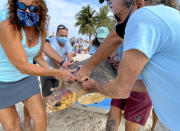 "In this photo provided by the Florida Keys News Bureau, Bette Zirkelbach, front left, and Richie Moretti, front right, manager and founder respectively of the Florida Keys-based Turtle Hospital, remove ""Sparb,"" from a transport tub Thursday, April 22, 2021, at Sombrero Beach in Marathon, Fla. The reptile was found off the Florida Keys in late January 2021 with severe wounds and absent a front right flipper. The sub-adult loggerhead sea turtle was not expected to survive but was treated with a blood transfusion, extensive wound care, broad-spectrum antibiotics, IV nutrition and laser therapy. The turtle made a full recovery and was returned to the wild in conjunction with Thursday's Earth Day celebrations. (Andy Newman/Florida Keys News Bureau via AP)"