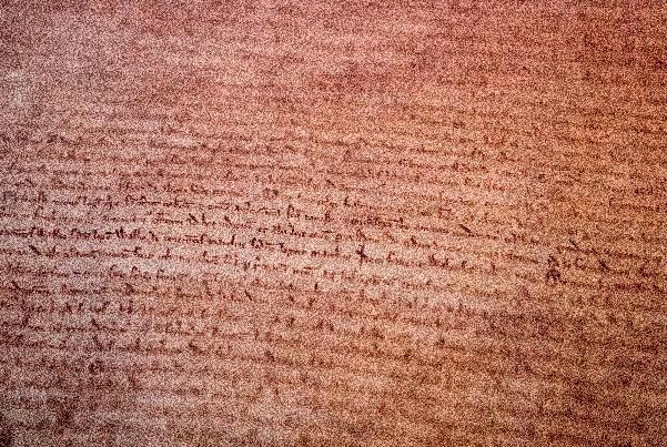A detailed view of the British Library's original copy of the London Magna Carta is pictured at the British Library in London on February 2, 2015, as they display all four surviving Magna Carta copies together (AFP Photo/Leon Neal)