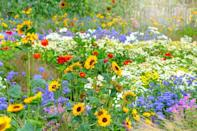 "<p>It's easier than you think to grow beautiful flowers! You just need to stick with these tried-and-true varieties and follow some basic rules. For starters, read the plant tag or description to learn if the flowers are <a href=""https://www.countryliving.com/gardening/garden-ideas/g24789027/shade-annuals/"" rel=""nofollow noopener"" target=""_blank"" data-ylk=""slk:annual flowers"" class=""link rapid-noclick-resp"">annual flowers</a>, which live one season, or <a href=""https://www.countryliving.com/gardening/garden-ideas/g24942296/full-sun-perennials/"" rel=""nofollow noopener"" target=""_blank"" data-ylk=""slk:perennial flowers"" class=""link rapid-noclick-resp"">perennial flowers</a>, which come back for many years. (Here's more about <a href=""https://www.countryliving.com/gardening/garden-ideas/a24843987/annual-vs-perennial/"" rel=""nofollow noopener"" target=""_blank"" data-ylk=""slk:annuals vs. perennials"" class=""link rapid-noclick-resp"">annuals vs. perennials</a>). If they're perennials, make sure they'll survive winters in your <a href=""https://planthardiness.ars.usda.gov/PHZMWeb/"" rel=""nofollow noopener"" target=""_blank"" data-ylk=""slk:USDA Hardiness zone"" class=""link rapid-noclick-resp"">USDA Hardiness zone</a>. And don't forget to give them the kind of light they need. For example, if the plant tag says full sun, that means six hours or more per day; part sun is about half that. Don't cheat! Shade lovers will sizzle in the hot afternoon sun, and sun lovers won't bloom in the shade. You also must keep your new plants watered when you first put them in the ground and during any dry spells—that is, if you don't get any rain for a week. (Or check out these <a href=""https://www.countryliving.com/gardening/garden-ideas/g26122002/drought-resistant-plants/"" rel=""nofollow noopener"" target=""_blank"" data-ylk=""slk:drought-resistant plants"" class=""link rapid-noclick-resp"">drought-resistant plants</a>!) And if you're planting flowers in pots, make sure there are drainage holes, or drill a few in the bottom of the pot yourself so its roots won't stay soggy.</p><p>Now, put on your gardening gloves and plant these easiest flowers to grow in your garden. </p>"