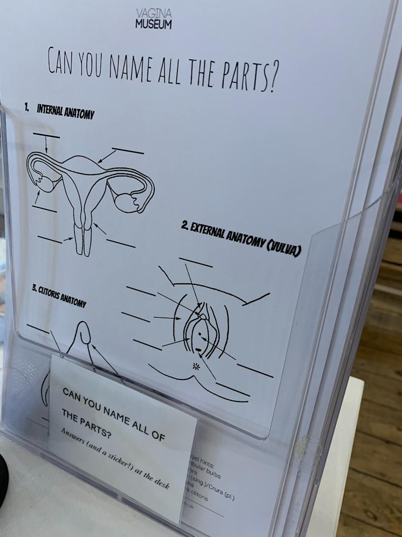 Visitors are invited to fill in a vagina anatomy quiz at the Vagina Museum in London