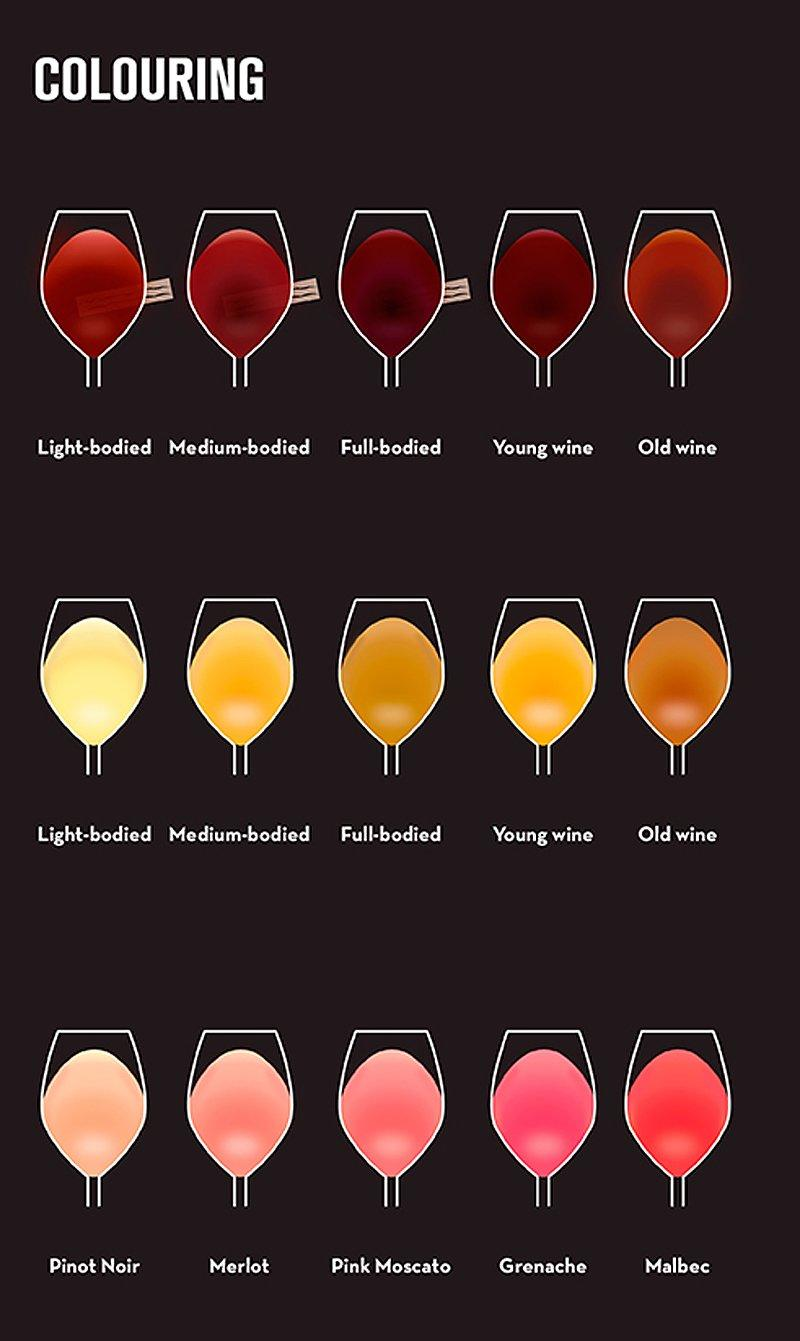 coloring beginner's guide to wine