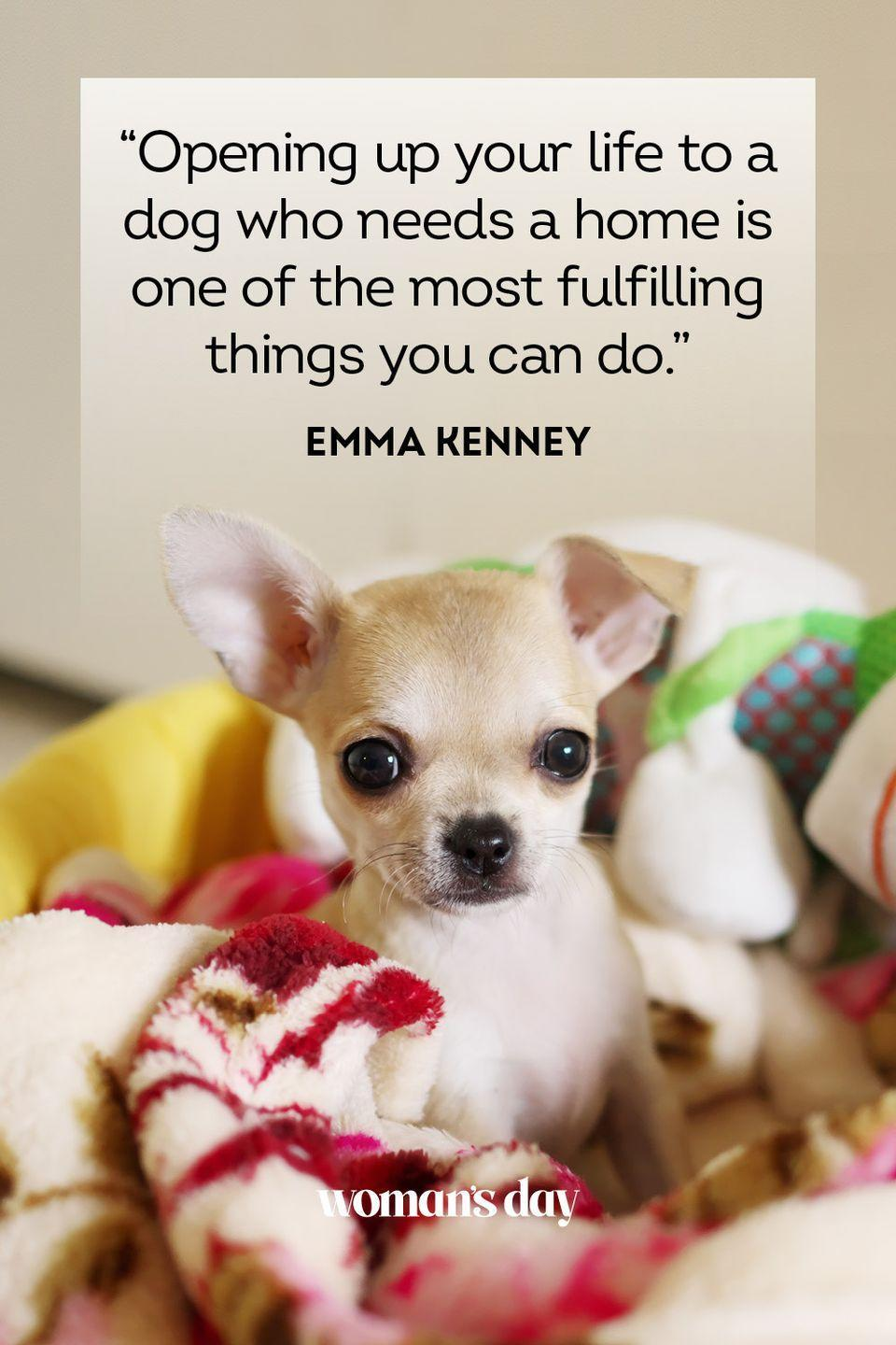 """<p>""""Opening up your life to a dog who needs a home is one of the most fulfilling things you can do.""""</p>"""