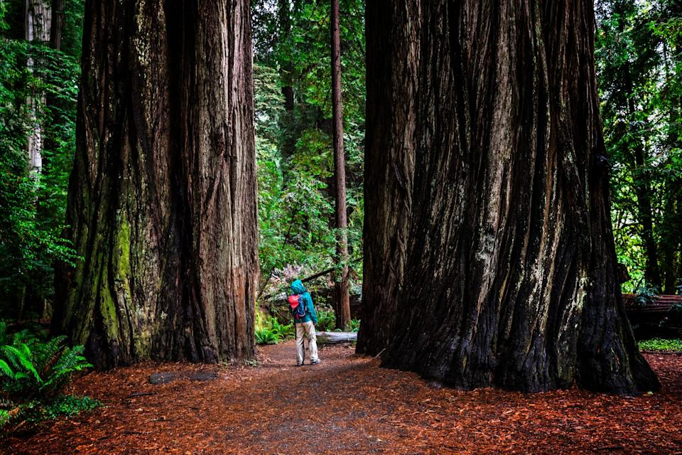 Walking among giants - GETTY