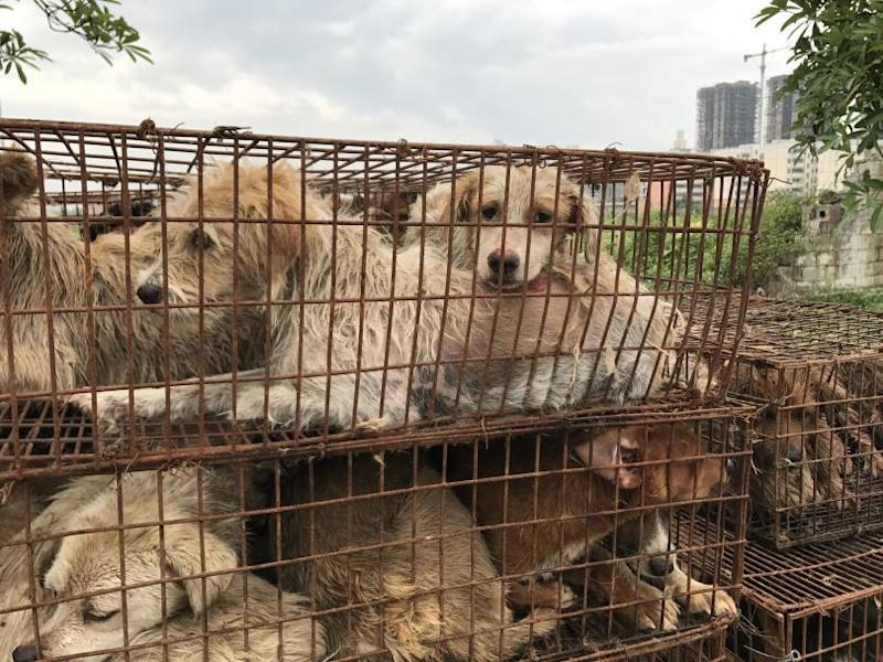 Dog Meat Yulin Summer Solstice