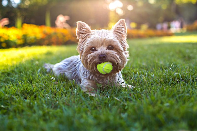 It's about time Fido had a new ball to play with. (Photo: Getty)