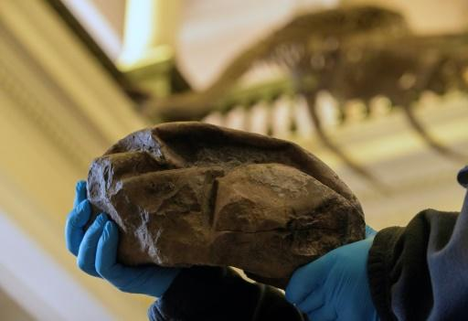 The fossil that had long baffled scientists is in fact the largest soft-shelled egg ever found, laid some 68 million years ago, possibly by a type of extinct sea snake or lizard