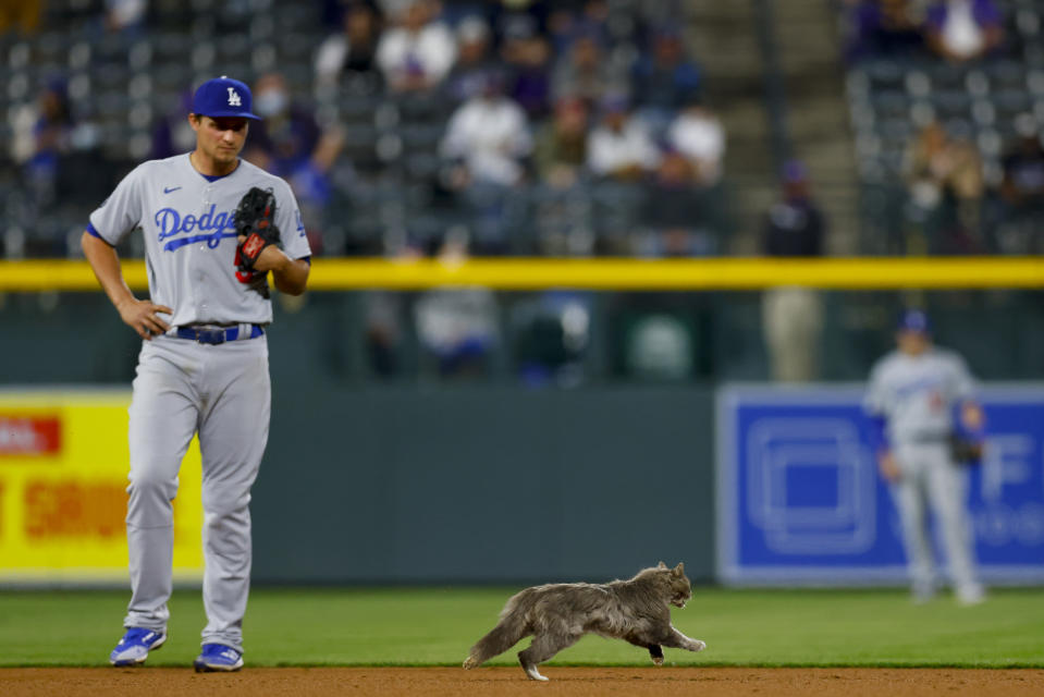 DENVER, CO - APRIL 2:  A cat runs onto the field and past Corey Seager #5 of the Los Angeles Dodgers during the eighth inning against the Colorado Rockies at Coors Field on April 2, 2021 in Denver, Colorado. (Photo by Justin Edmonds/Getty Images)