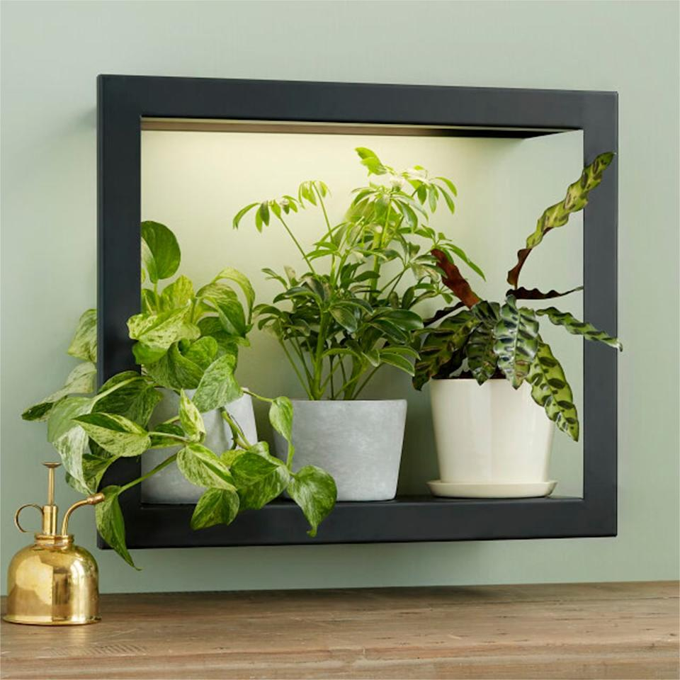 """$140, Uncommon Goods. <a href=""""https://www.uncommongoods.com/product/growlight-frame-shelf"""">Get it now!</a>"""