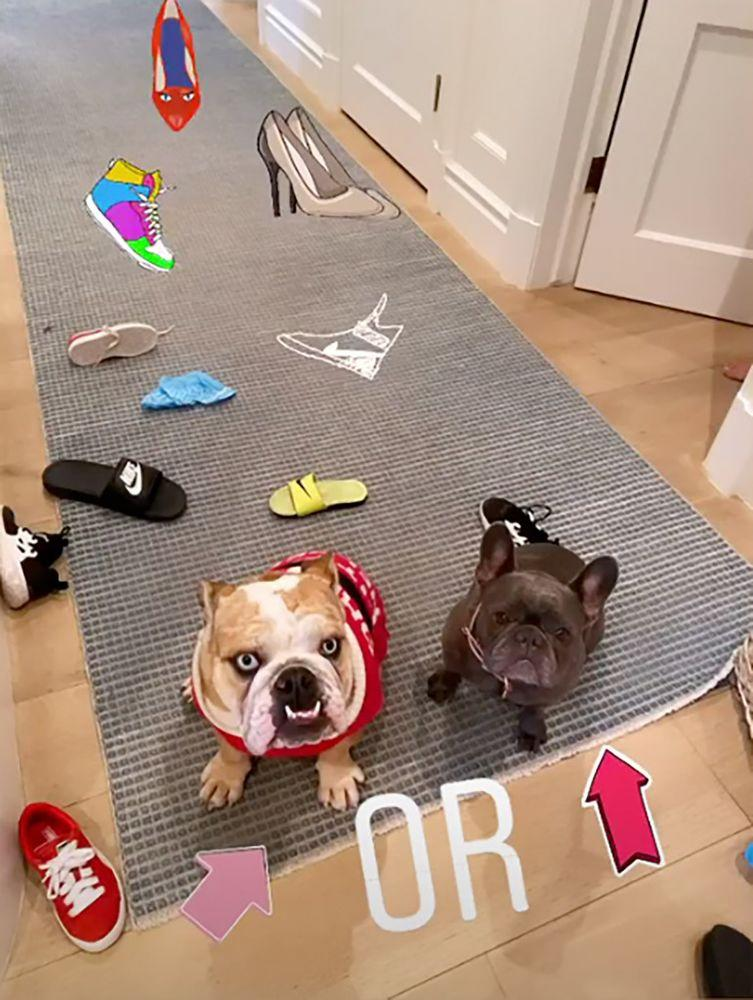 Reese Witherspoon's dogs | Reese witherspoon/Instagram