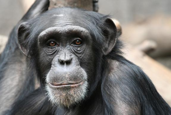 Brain Size Didn't Drive Evolution, Research Suggests