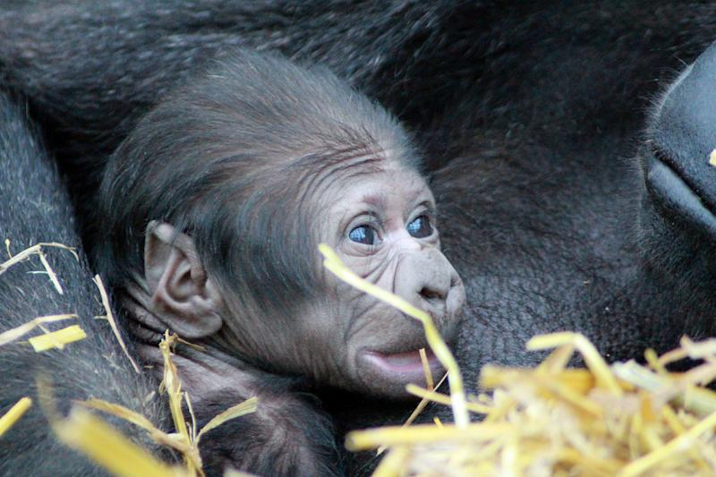 Viringika is so protective of her baby, staff don't even know whether it's male or female (PA)